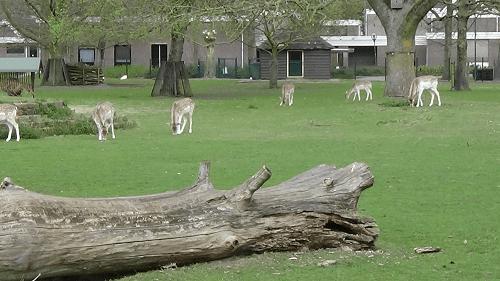 dierenparkje op het terrein van Willibrordus